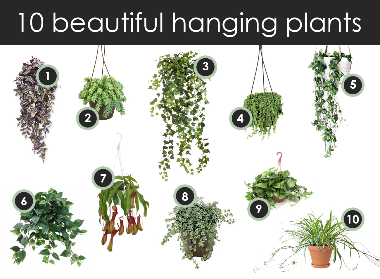 Top 10 hanging plants