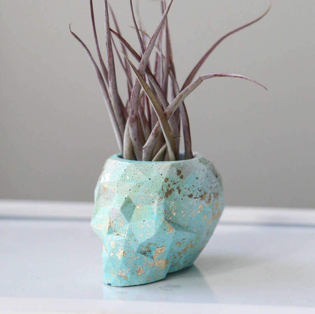 Ombre skull concrete air plant holder