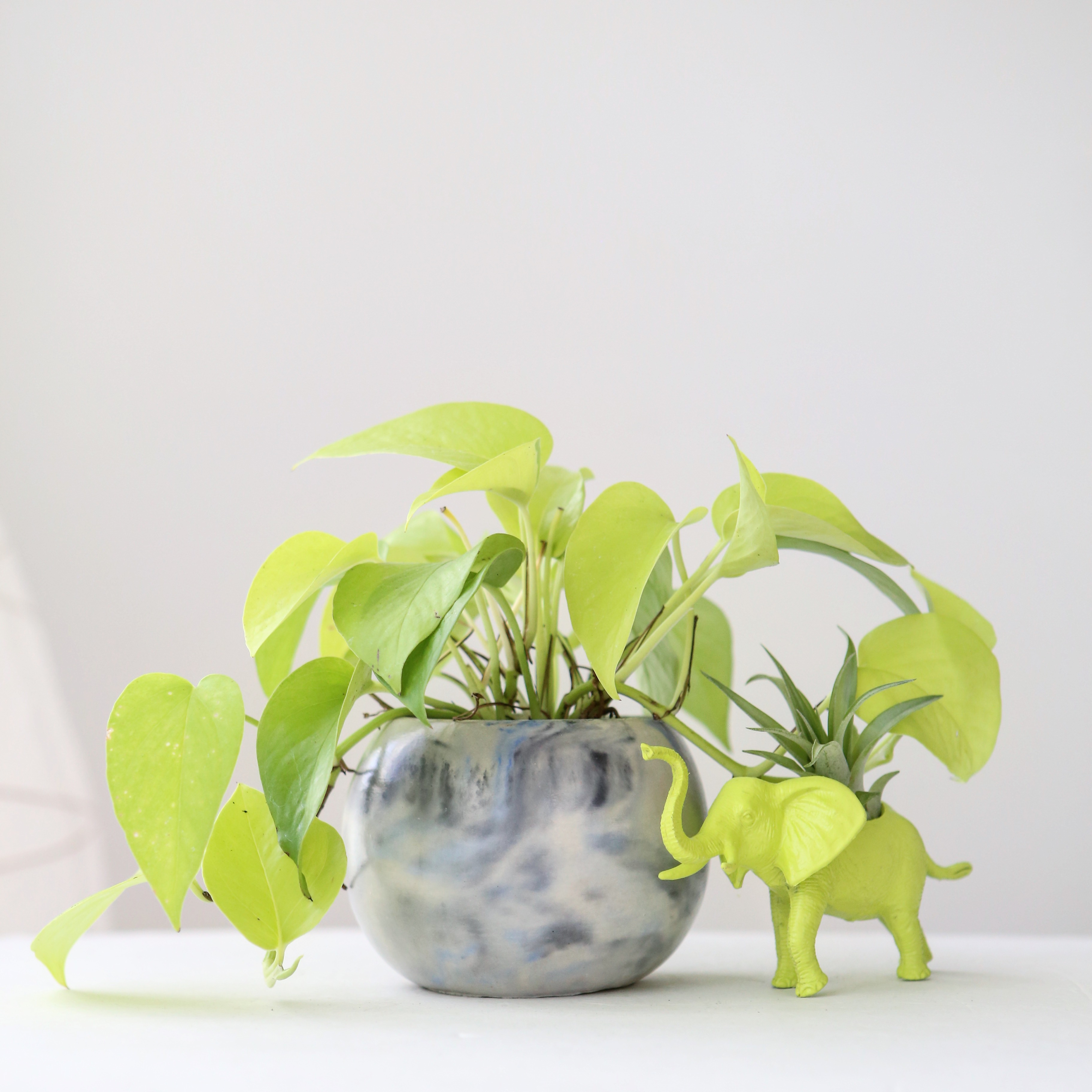 Neon pothos in Modern Plant Life marble concrete planter